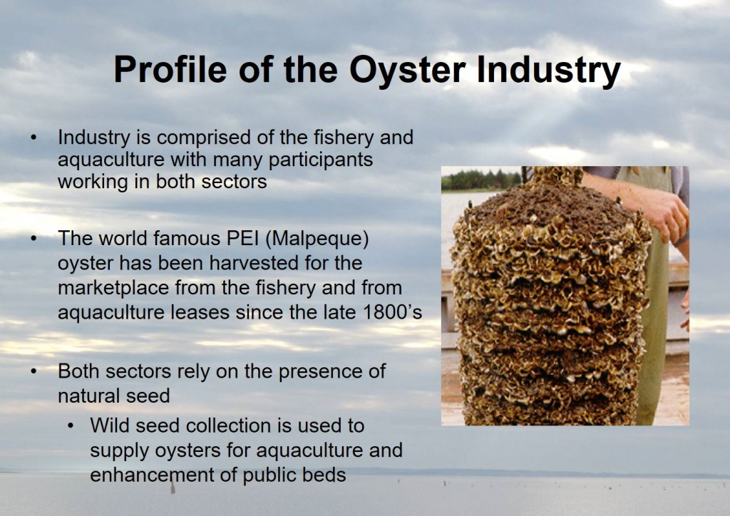 Profile of the Oyster Industry
